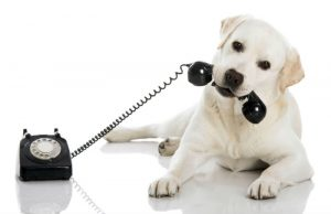 White labarador dog with black phone in mouth